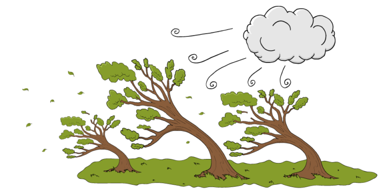 showing trees holding up under a strong wind