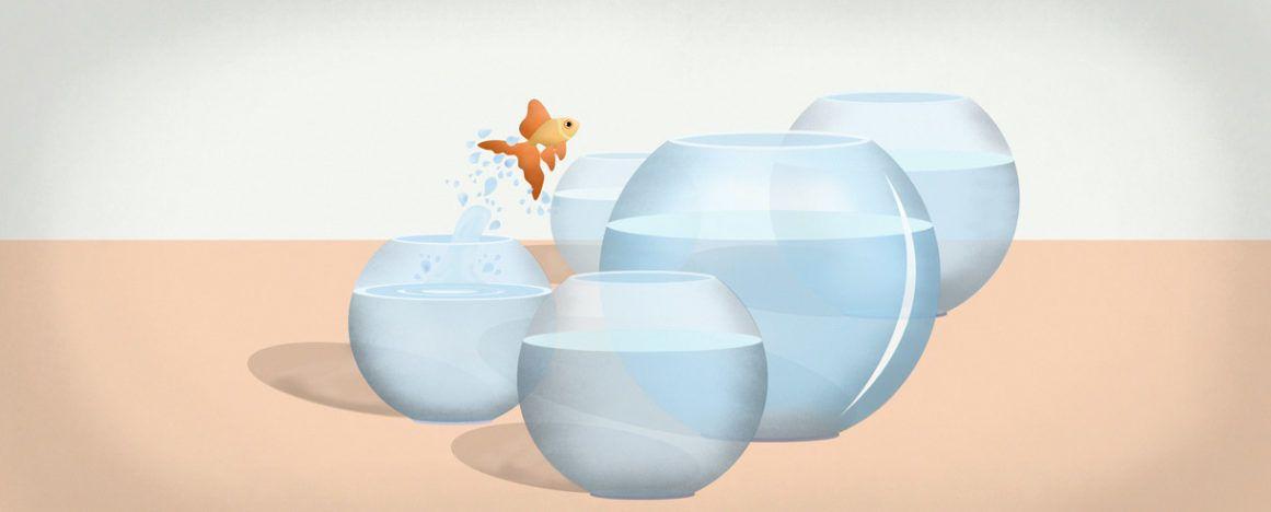 goldfish jumping to bigger bowl