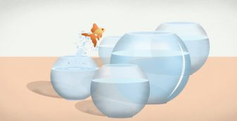 goldfish jumping to bigger bowl